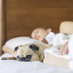 Top 5 Schlaftipps: Besser und erholsam schlafen