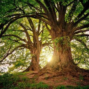 Massage Übung: Selbstbewusst und stark wie ein Baum